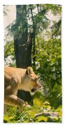 Female Lion On The Move Beach Towel