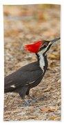 Female Pileated Woodpecker Beach Towel