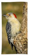 Female Red-bellied Woodpecker Beach Towel