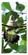 Female Ruby Throated Hummingbird Beach Towel