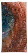 Female Sumatran Orangutan Beach Towel