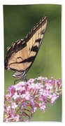 Female Tiger Butterly-1-featured In Macro-comfortable Art And Newbies Groups Beach Towel