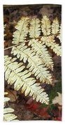 Fern In The Forest Beach Towel