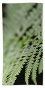 Fern Leaf Beach Towel