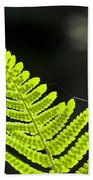 Fern Tip Beach Towel