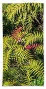 Ferns And More Beach Towel