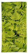 1m2436-ferns At The Base Of Mt. Robson  Beach Towel