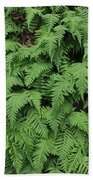 D3b6333-ferns In Sonoma 2  Beach Towel