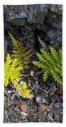 Ferns In Volcanic Rock Beach Towel