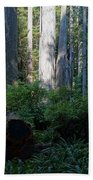 Ferns Of The Redwood Forest Beach Towel
