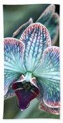 Festive Orchid Beach Sheet