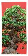 Ficus Bonsai Beach Towel