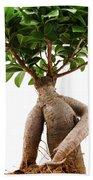 Ficus Ginseng Beach Towel
