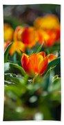 Field Of Orange Tulips Beach Towel