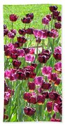 Field Of Purple Tulips 1 Beach Towel