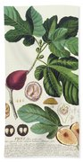 Fig Engraved By Johann Jakob Haid  Beach Towel