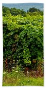 Finger Lakes Vineyard Beach Towel by Frozen in Time Fine Art Photography