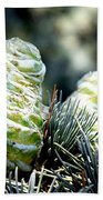 Fir Cone Beach Towel