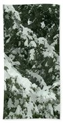 Fir Tree Branch Covered With Snow  Beach Towel