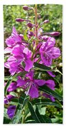 Fireweed In Katmai National Preserve-ak- Beach Towel