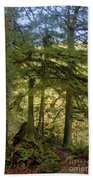 Firs And Ferns Beach Towel