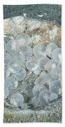 Flamboyant Cuttlefish Eggs Beach Towel