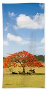 Flamboyant Beach Towel