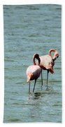 Flamingos Gathering Together Beach Towel