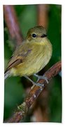 Flavescent Flycatcher Beach Towel