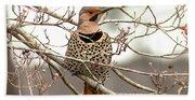 Flicker - Alabama State Bird - Attention Beach Towel