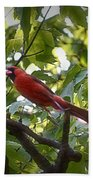 Flight Of The Cardinal Beach Towel