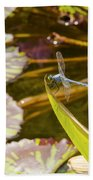 Flittering Dragonfly Beach Towel