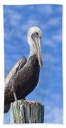 Florida Brown Pelican Beach Towel by Kim Hojnacki