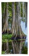 Florida Cypress Trees Beach Towel