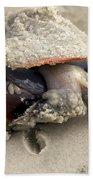 Florida Fighting Conch Beach Towel