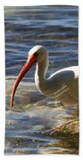Florida Ibis Beach Towel