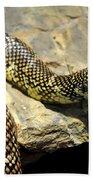 Florida King Snake Lampropeltis Getula Floridana Usa Beach Towel