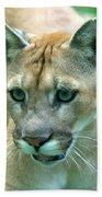 Florida Panther Beach Towel