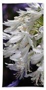 Flower-agapanthus-white-flora Beach Towel