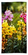 Flower - Antirrhinum - Grace Beach Towel by Mike Savad