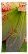 Flower Child Amaryllis Flower Art Beach Towel