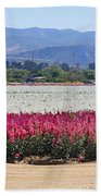 Flower Fields Of Lompoc Valley Beach Towel