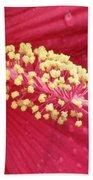Flower Garden 15 Beach Towel