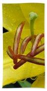 Flower Garden 28 Beach Towel