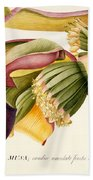 Flower Of The Banana Tree  Beach Towel