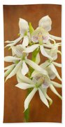 Flower - Orchid - A Gift For You  Beach Towel