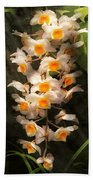 Flower - Orchid - Dendrobium Orchid Beach Towel