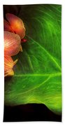 Flower - Orchid - Phalaenopsis Orchids At Rest Beach Towel