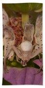 Flower Spider On Horsemint #2 Beach Towel