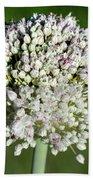 Flowering Leek - Topaz Clarity Demo Beach Towel